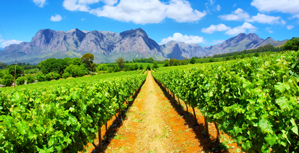 Cape Town - Wineries