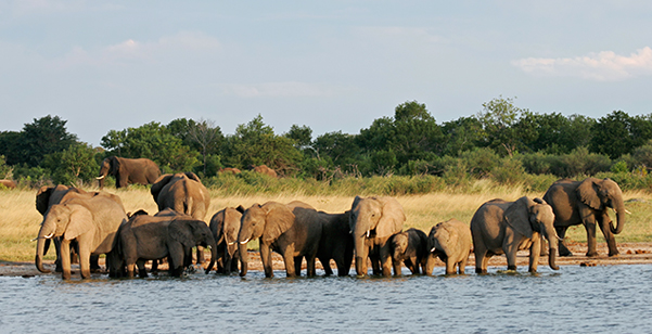 Hwange National Park - Elephant